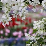 Garten-Impressionen_008