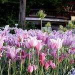 Garten-Impressionen_018