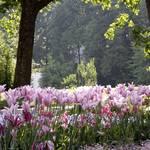 Garten-Impressionen_020